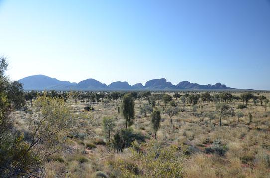 Vue sur Kata Tjuta depuis le point d'observation