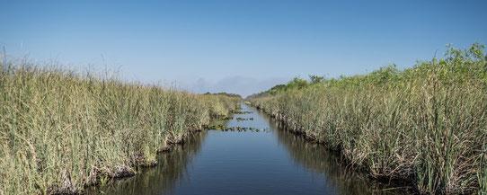 Dans un canal des Everglades !