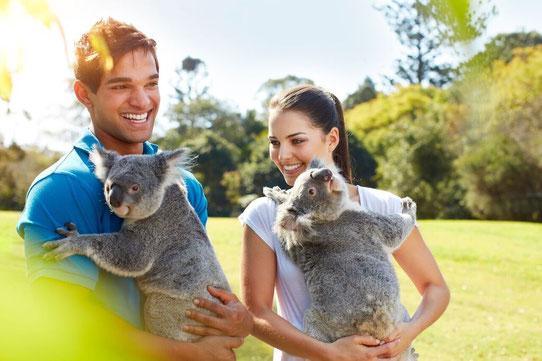 Rencontrer des animaux à Brisbane