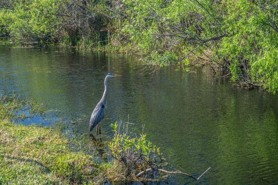 Il n'y pas que des alligators à voir à Shark Valley !