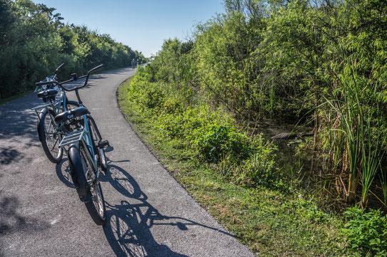 Shark Valley en vélo en Floride !