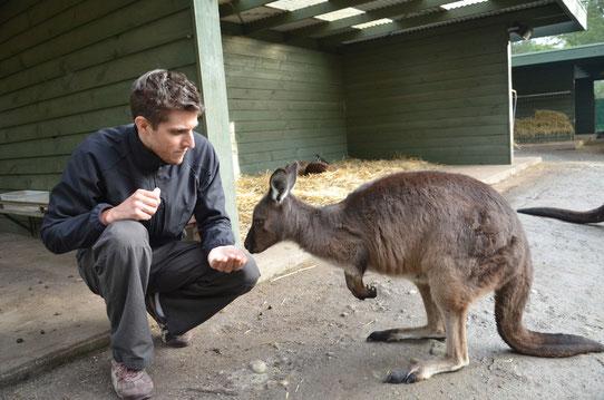 Nourrir les kangourous à Healesville - CopyRight : Trip85.Com
