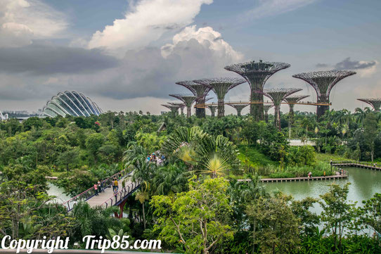 Gardens by the bay : Vue depuis le Marina Bay Sands