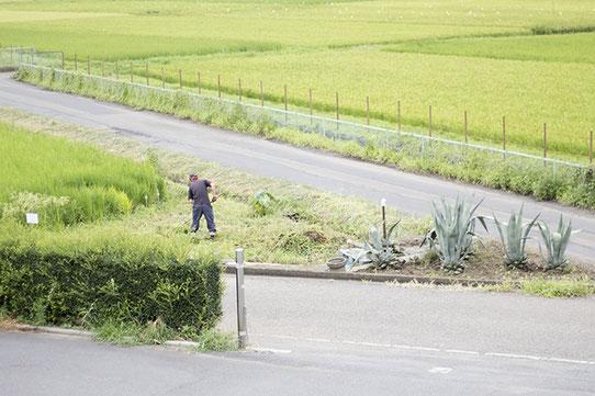 """高橋亮太さんが作業をしているのは、蔵の前の """"デルタ地帯"""" 。泉橋酒造を訪れた際にはその先端に立って、広がる田んぼを見渡してみたい。"""