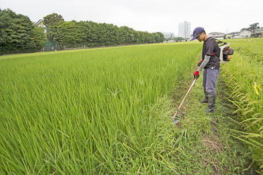 少し離れた田んぼでは犬塚さんが草刈り機で作業中。