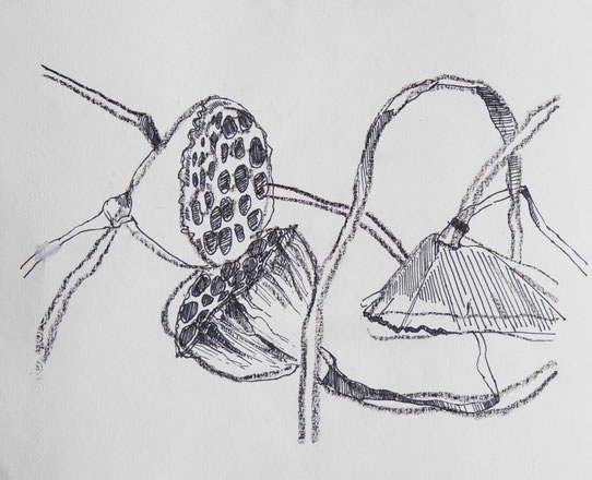 Grafik Lotusblumen Konturen