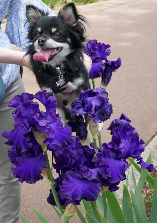 Iris parc floral de la Source: univers emylila