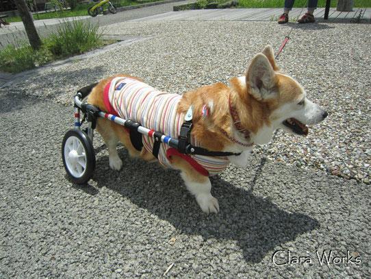 犬の車椅子 犬用車椅子 犬の車いす 犬用車いす 犬 車椅子 ドッグカート 歩行器 車椅子犬