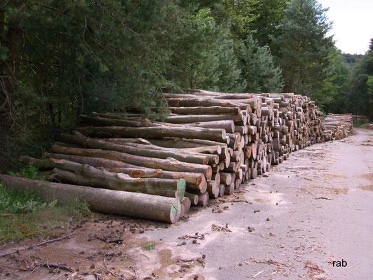 Im Pfälzerwald sind kaum noch alte Buchen zu finden - nachhaltig hohe Holz- entnahme?