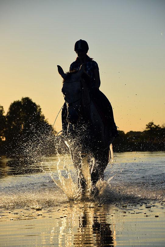 Pferd, Wasser, Reiter im Sonnenuntergang, Online selbständig machen,