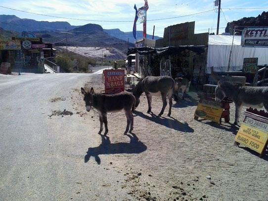 Bild: Oatman, Arizona, HDW-USA, Roadtrip, Amerika, Mister T. und der Weiße Büffel, Route 66