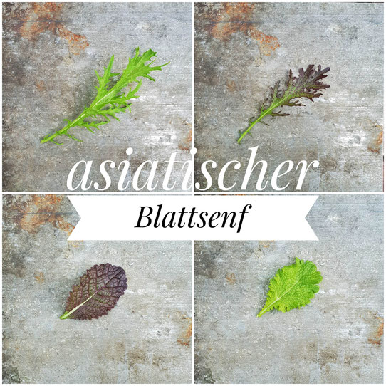 Green Frills, Red Frills, Red Mustard Leaf, Green Mustard Leaf