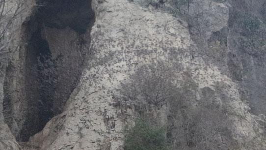 6 Millionen Fledermäuse kommen in 15 Minuten aus der Höhle geflogen...beeindruckend