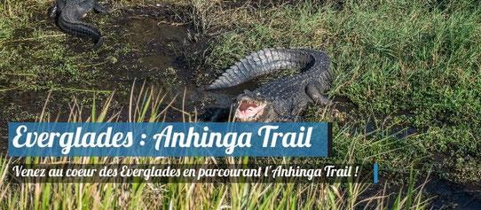 Sur l'Anhinga Trail dans les Everglades en Floride !