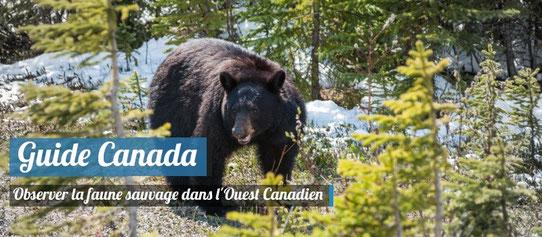 Observer la faune dans l'Ouest Canadien