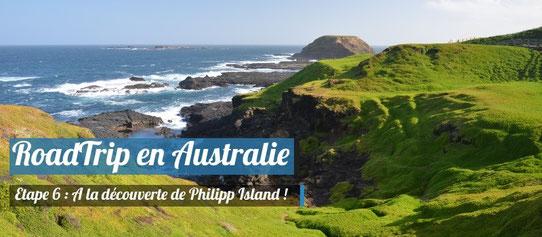 A la découverte de Philipp Island !