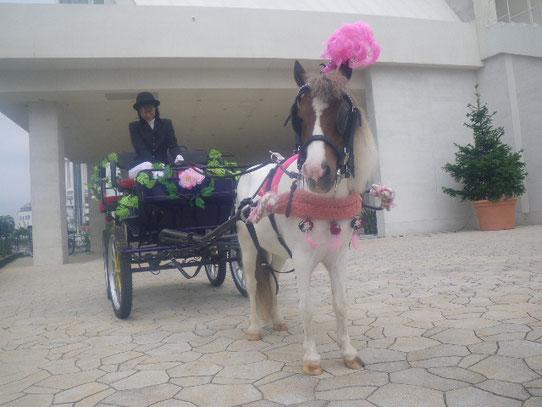 かわいい演出ができるポニー馬車も魅力です