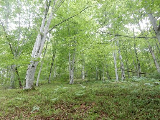 La forêt du Bager et la vie secrète de ses arbres dévoilée par l'ACCOB et le film de Peter Wohlleben forestier en Allemagne