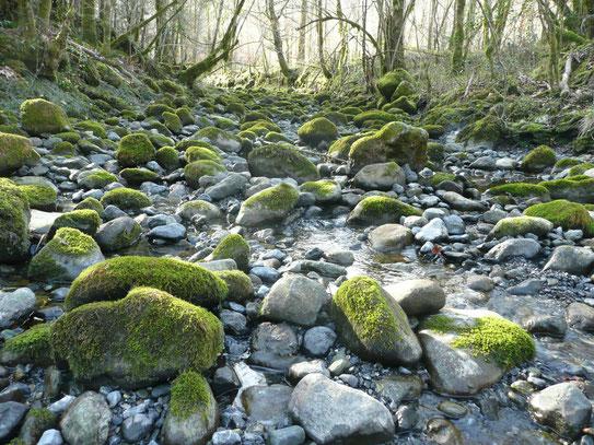 Rivière l'Ourtau à Oloron en période d'étiage. La commune d'Oloron Ste Marie mauvais élève ! Eviter le gaspillage et changer la gestion suffiraient sauver la biodiversité. ACCOB Oloron