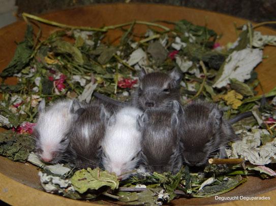 Von links: Ivor, Isidor, Ida, Ilka, Ibo und hinten Isa