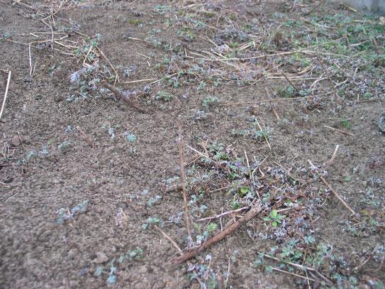 H26/01/30撮影 気温2度穏やかな一日でした。