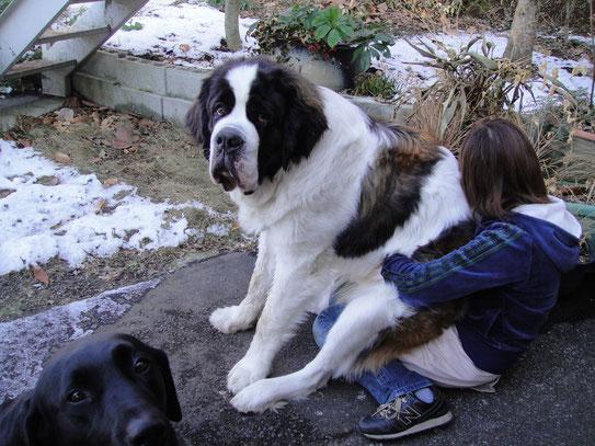 こんなに大きくなっても抱っこ大好きなドン君です