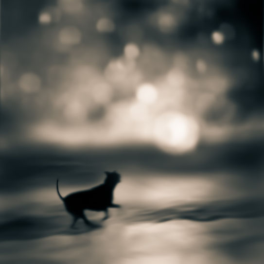Tami Bone Texas Photography Mythos Sinking sun black cat