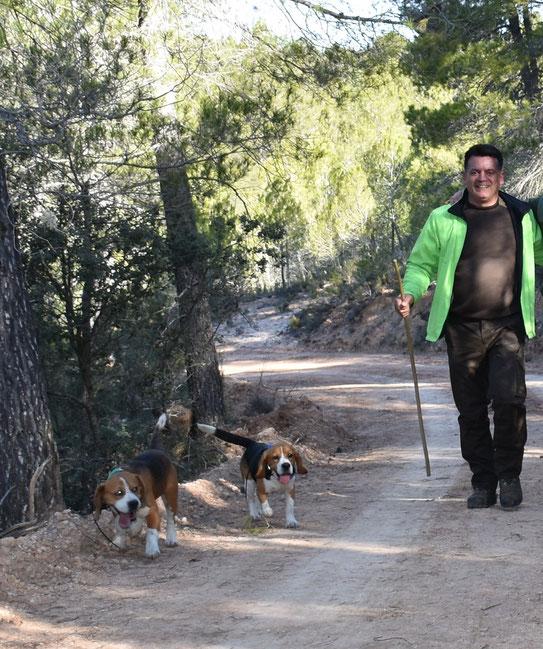 """1º CLASIFICADO, modalidad """"jauría"""":  JESÚS CONDE COUSO con sus perros beagles - 495 puntos"""