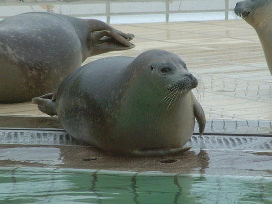 Een bezoek aan de zeehondencreche Pieterburen in de gelijknamige plaats, kon voor ons als natuur en dierenlief-hebbers uiteraard niet uitblijven.