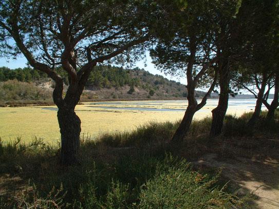 De zoutpannen van Peyriac-de-Mer bestaan al sinds de 14e eeuw en bieden uitstekende mogelijkheden voor schitterende (dag)wandelingen.