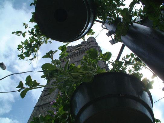 De befaamde Sint Baafskathedraal, gezien vanuit de in bloei staande sierbloemen die in de Hoofdkerkstraat aan de lantaarns hangen.