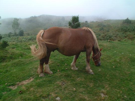Met op de achtergrond al de opkomende mist bleven de bergpaarden rustig grazend genieten van het gras.