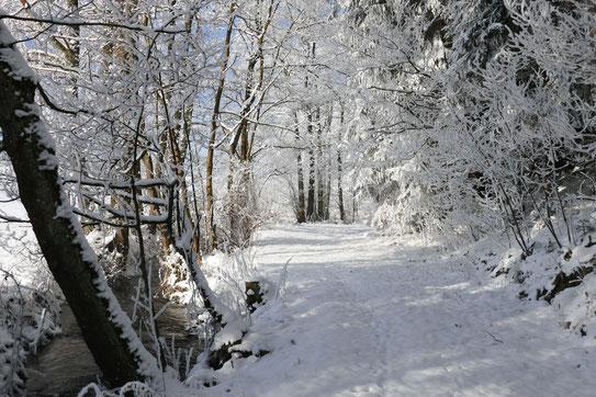 Weg entlang Muglbach bei Maiersreuth (Foto von Raimund Koller)