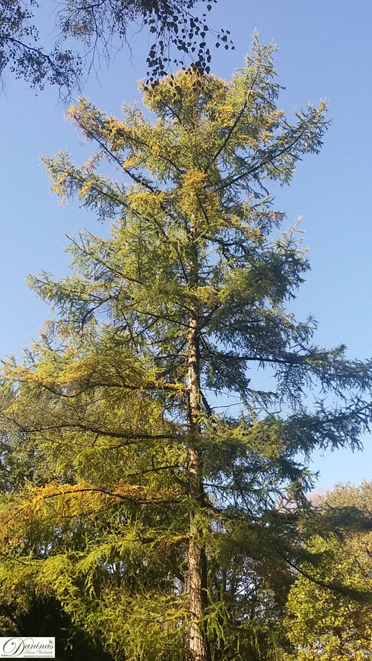 Herbst von seiner schönsten Seite: Warme Farben, bunte Blätter, Blüten und Früchte.