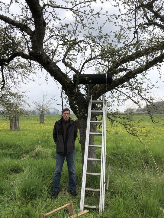 Leiter an einem niedrigen Baum, eine schwarze Röhre waagerecht im Baum