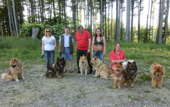 ... beim Spaziergang: Aragorn, Akela, Aida, Ban, Ronja, Ylvi u. Shiwa