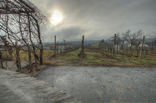 Weingut Steininger - Langenlois Österreich