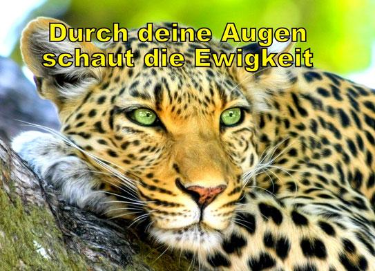 Der Leopard symbolisiert pure Präsenz. Durch seine Augen schaut die Ewigkeit. Wir alle sind jetzt und immer im Raum der Ewigkeit. Advaita beschreibt diese Ewigkeit. Advaita weist auf das ewige Eine hin. Advaita-Lehrer vertreten die stille Präsenz.