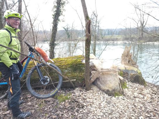 viele Trails führen direkt am Ufer der Reuss entlang.