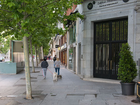 dog in Madrid