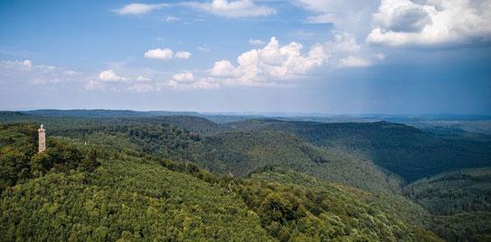 Einzigartig: Das Bosphärenreservat Pfälzerwald mit dem Luitpoldsturm. Jeder Energiespargel würde das Auge beleidigen Fotos: Initiative Pro Pfälzerwald