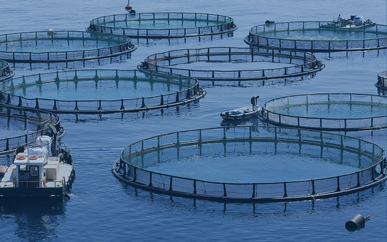 Aquaculture à l'île Maurice avec le Port Franc, c'est une filière à développer dans l'économie bleue à très fort potentiel