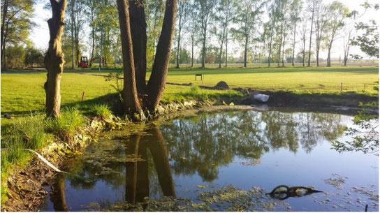 Teich an der Spielbahn 7: hinten ist das frisch verlegte Rohr (bzw. der Graben) zu sehen, das quer über die Bahn zu einem kleinen Wäldchen Richtung Süden gezogen wurde.
