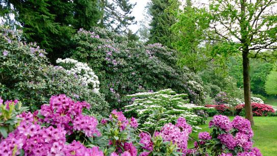 Gartenfoto auf der Gartenreise nach England