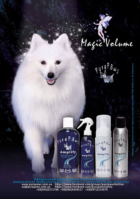 japanese spitz foto, japanese spitz photo, japanese spitz dogs models, dogs models Kiev Ukraine, white dogs models spitz, japanese spitz SIMBA TSAR ZVEREI, Pure paws amplify line, Pure paws volume, Pure Paws Ukraine, cosmetics for pets, Groom Service