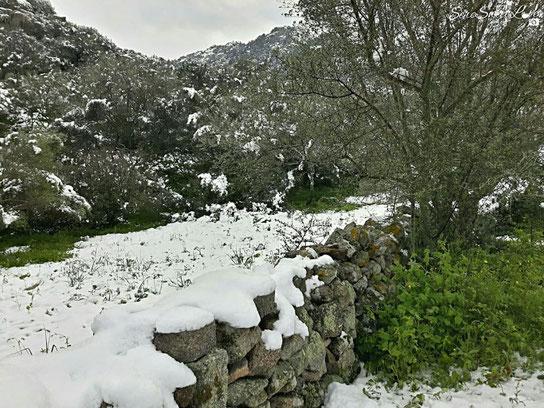 Neve nelle campagne di Olbia (OT), 28 febbraio 2018, Sardegna, Sardinia, Italy
