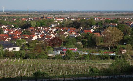 """Am Ortsrand von Deidesheim liegt wunderbar mitten in den Weinbergen die """"Oase im Paradiesgarten"""", das Schwimmbad."""