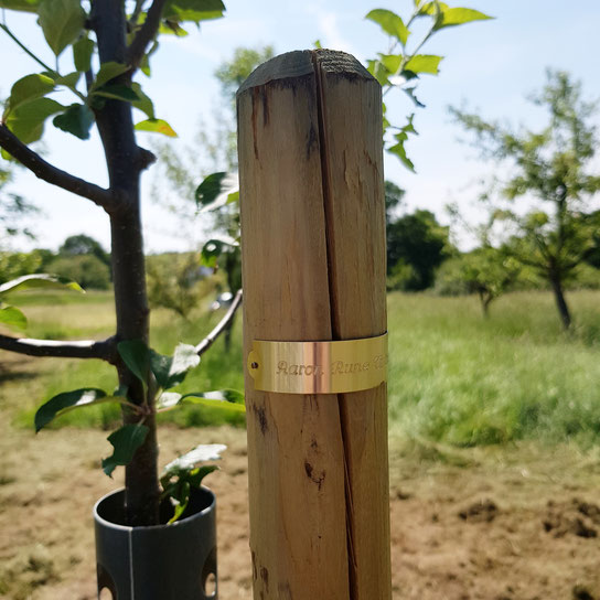 Taufe Baum pflanzen Taufritual Taufpaten freie Rednerin Nicole Decker-Paxton