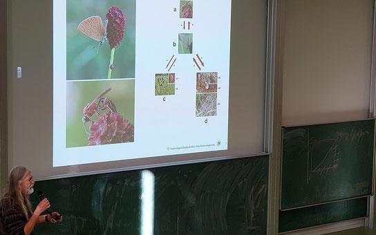 Dr. Sorg erörtert Zusammenhänge in der Insektenwelt - hier anhand des Wiesenknopf-Ameisenbläulings und einer parasitären Wespenart, welche abhängig von ihrer einzigen Wirtsart ist.