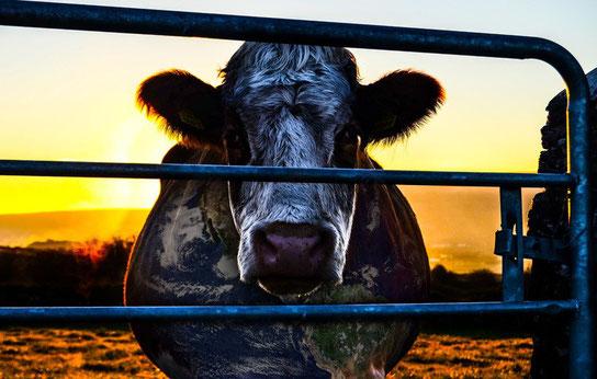 © www.cowspiracy.com